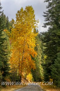 North Idaho Forest In The Fall