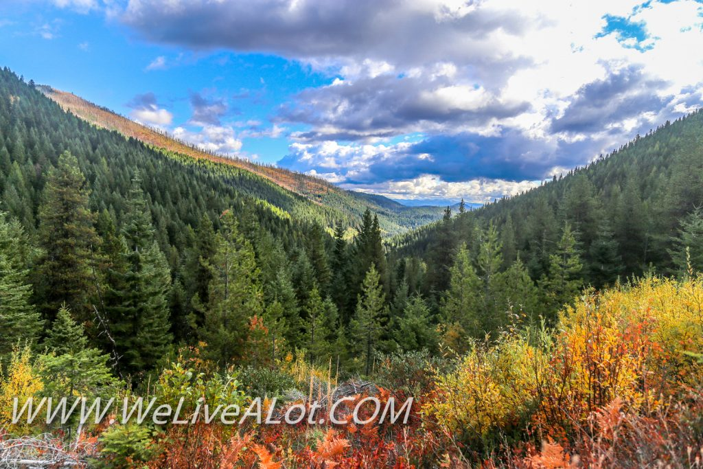 Fall Colors In North Idaho Forest