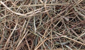dried grass for fire tinder