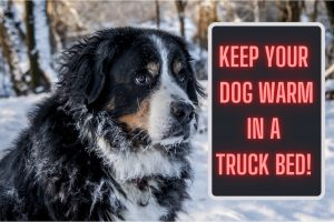 how to keep your dog warm in a truck bed bigger